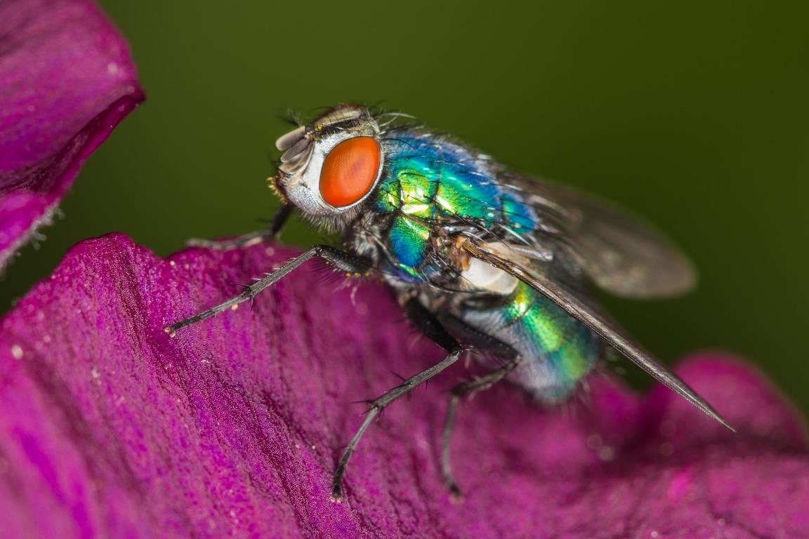 High resolution Fly hd 1152x768 wallpaper ID:275252 for PC
