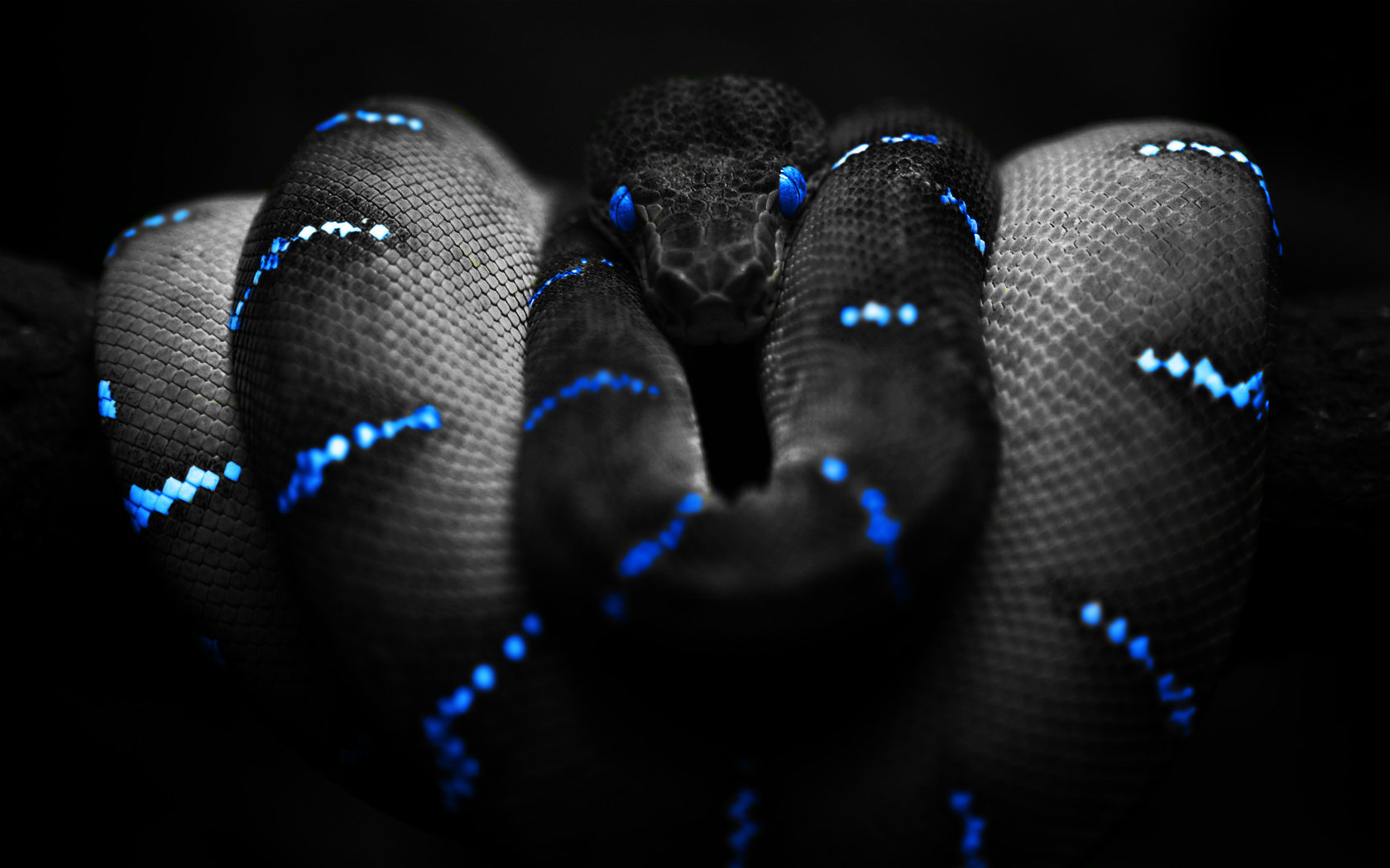 Best Snake wallpaper ID:137167 for High Resolution hd 1680x1050 desktop