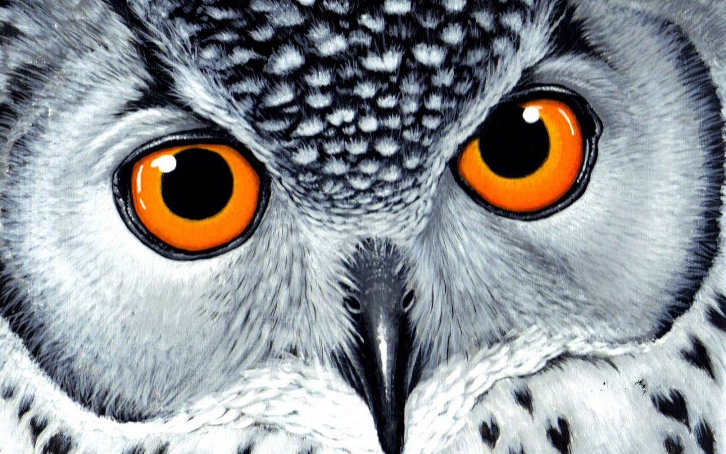 Awesome Owl free wallpaper ID:237495 for hd 1440x900 PC