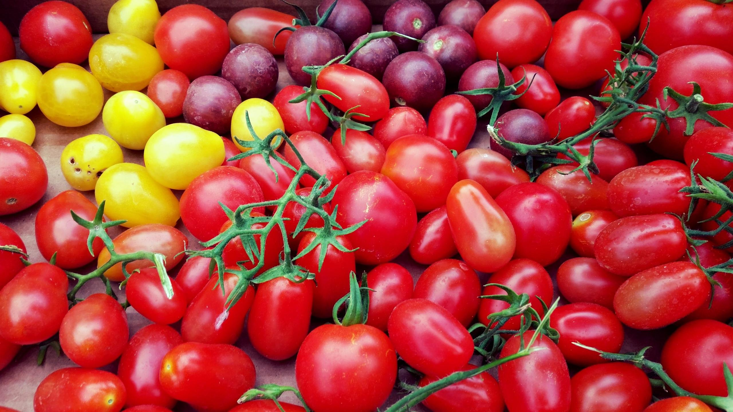 Download hd 2560x1440 Tomato computer wallpaper ID:95448 for free