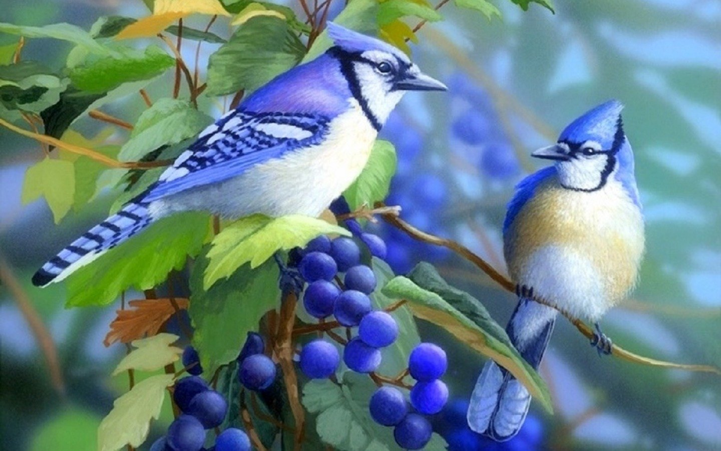Free Blue Jay high quality wallpaper ID:158380 for hd 1440x900 PC