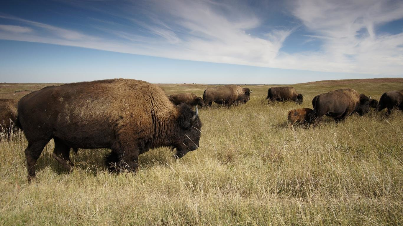 High resolution Bison hd 1366x768 background ID:130633 for computer