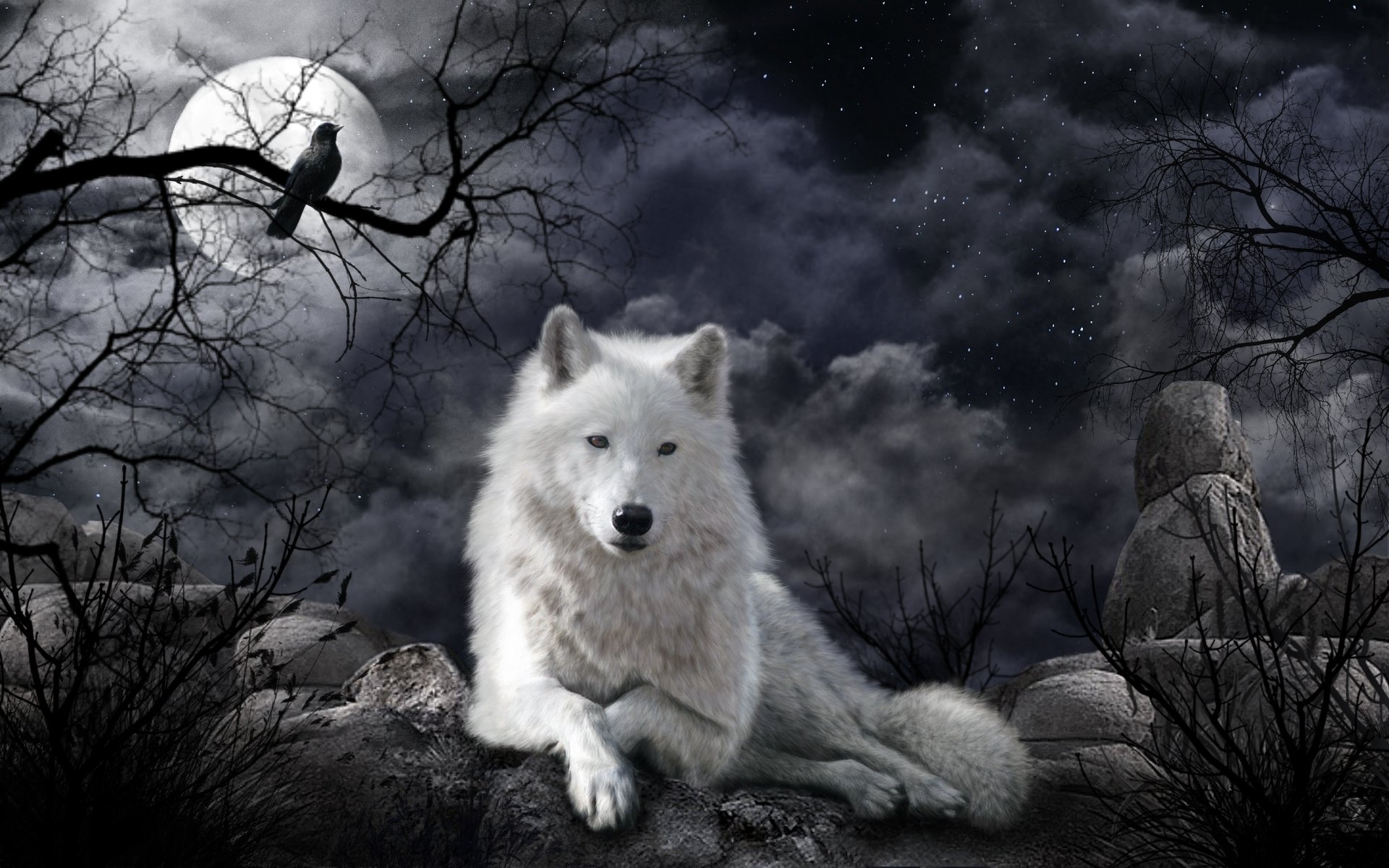 Free White Wolf high quality background ID:118219 for hd 1920x1200 desktop