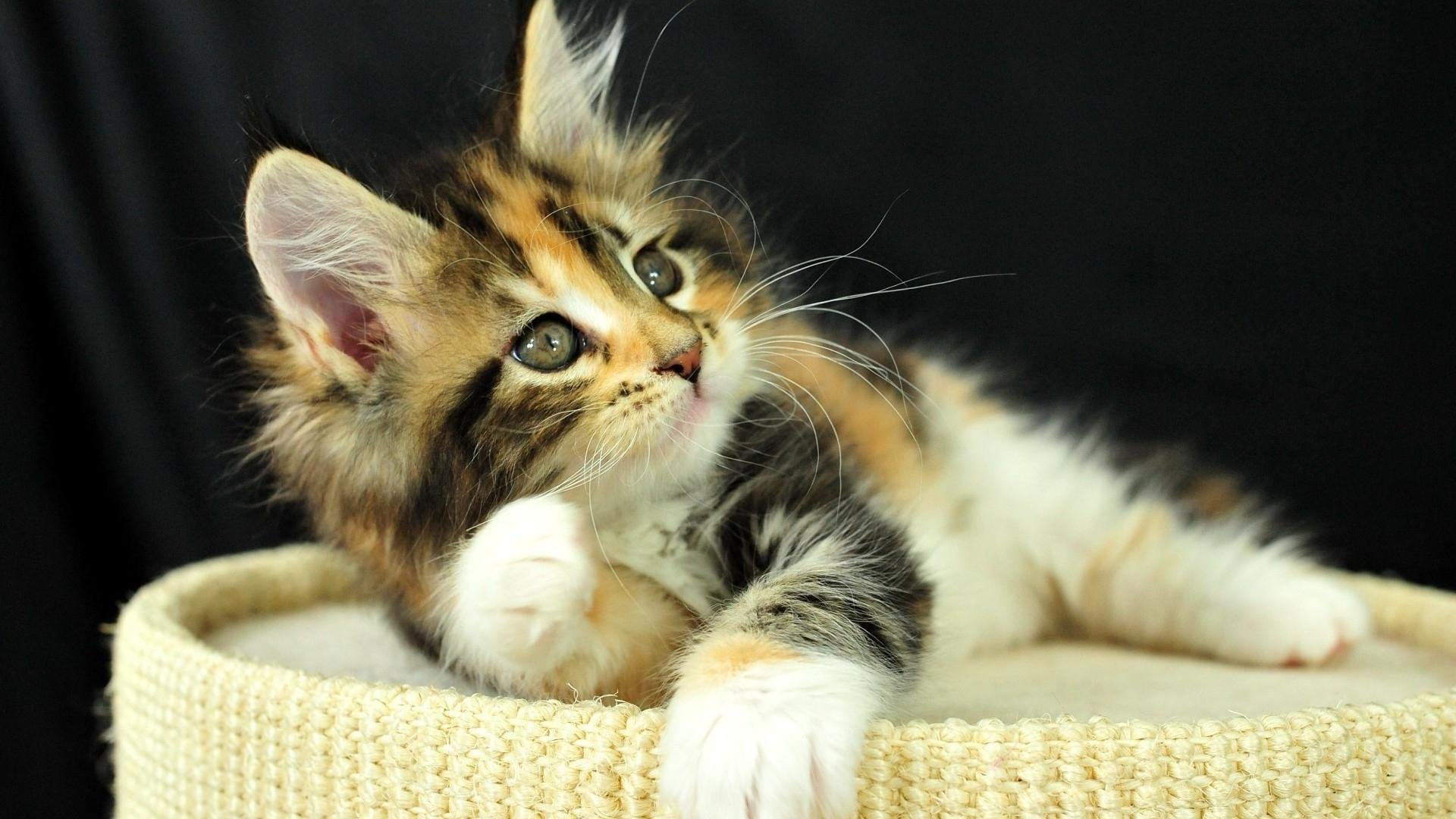 Awesome Kitten free background ID:426527 for hd 1920x1080 computer