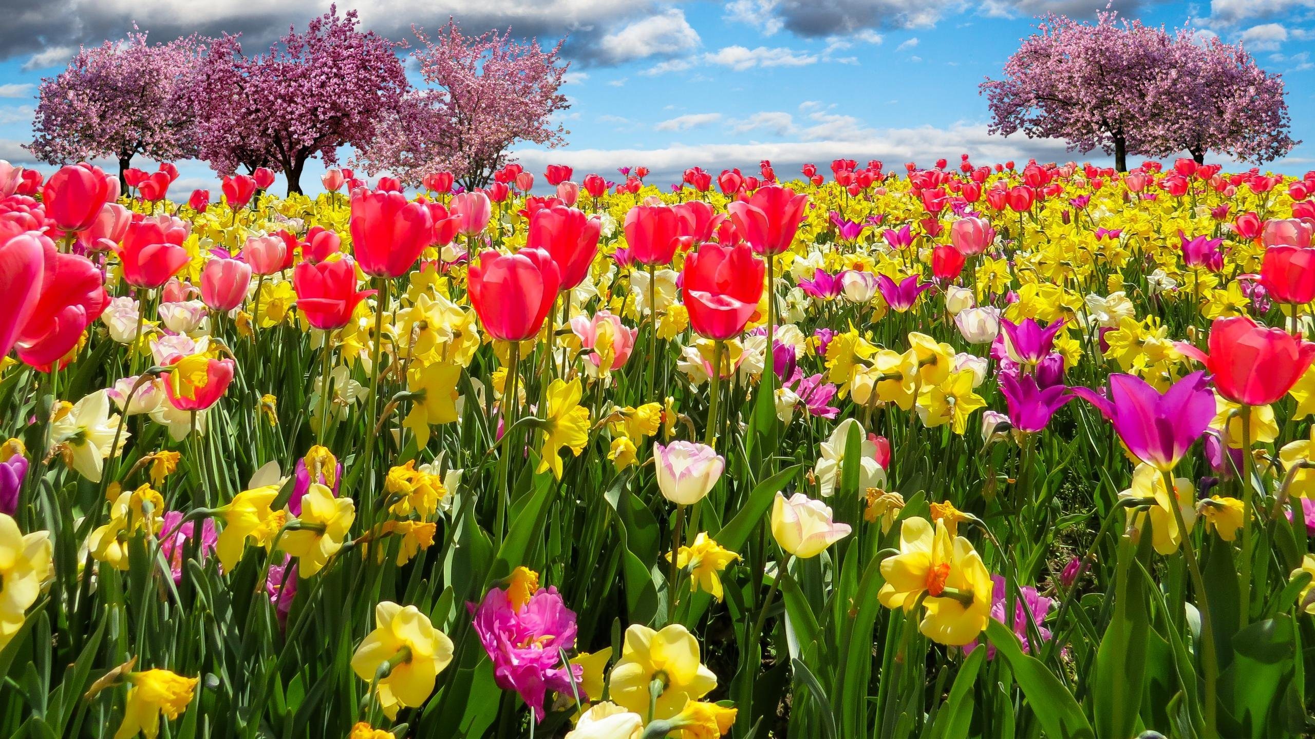 Awesome Spring free wallpaper ID:104146 for hd 2560x1440 desktop