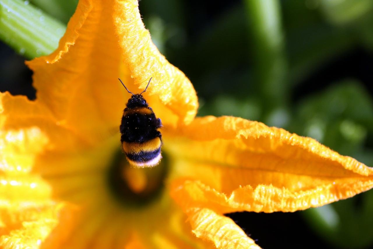 Awesome Bumblebee free wallpaper ID:333984 for hd 1280x854 desktop