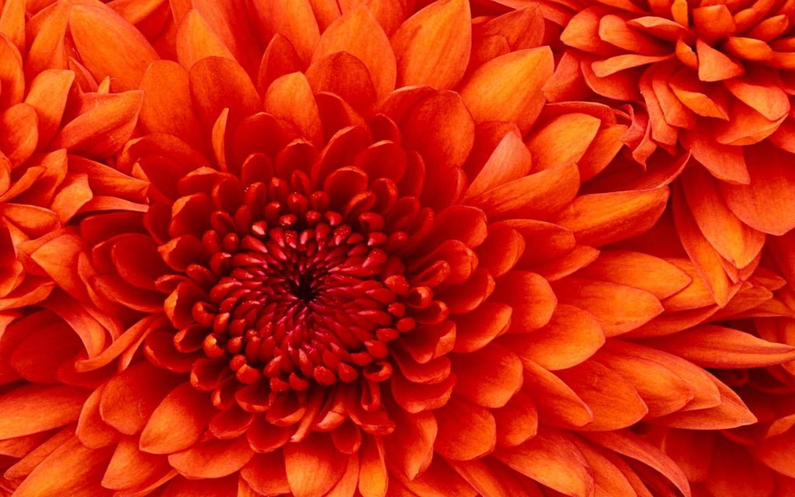 27+ Flower Computer Background  JPG