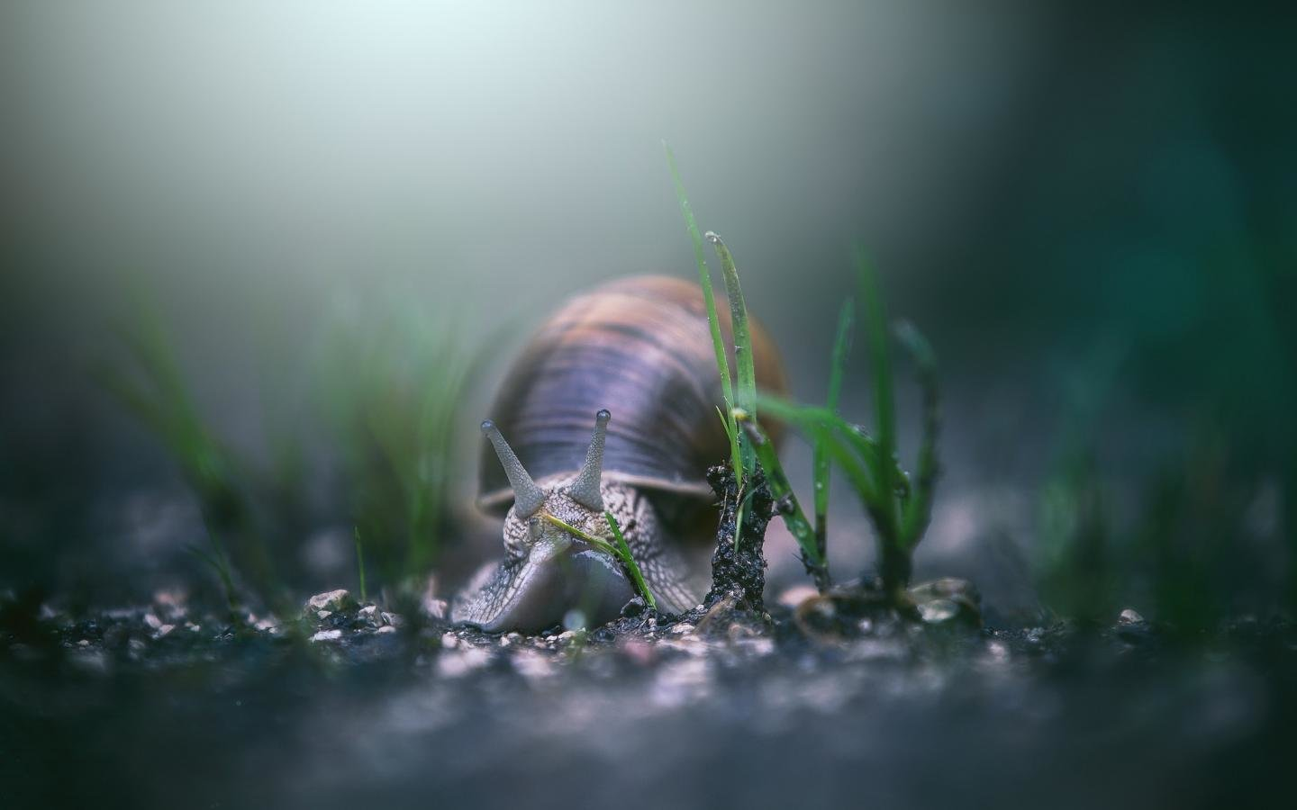 Free Snail high quality wallpaper ID:198866 for hd 1440x900 desktop