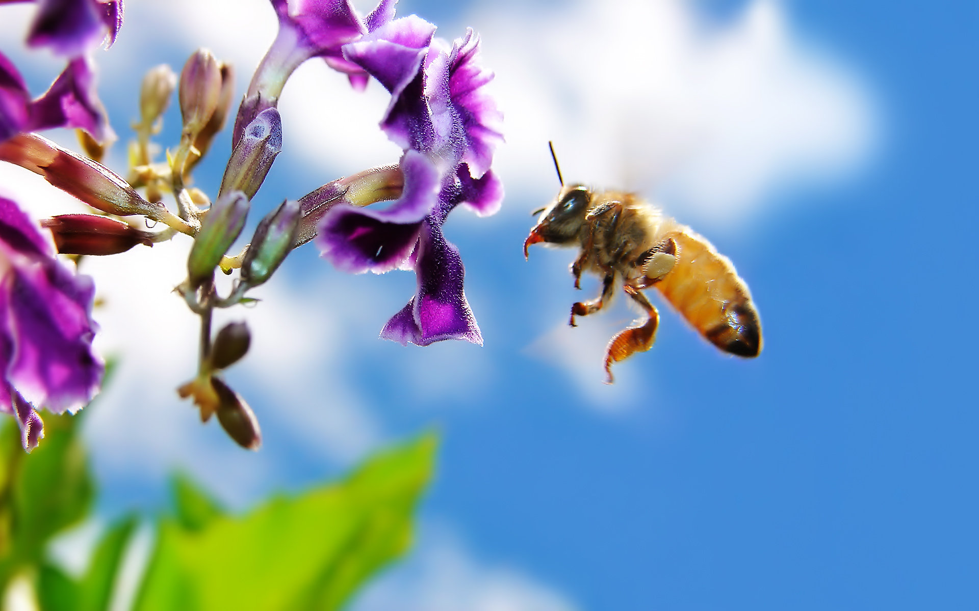 Free Bee high quality wallpaper ID:460930 for hd 1920x1200 computer