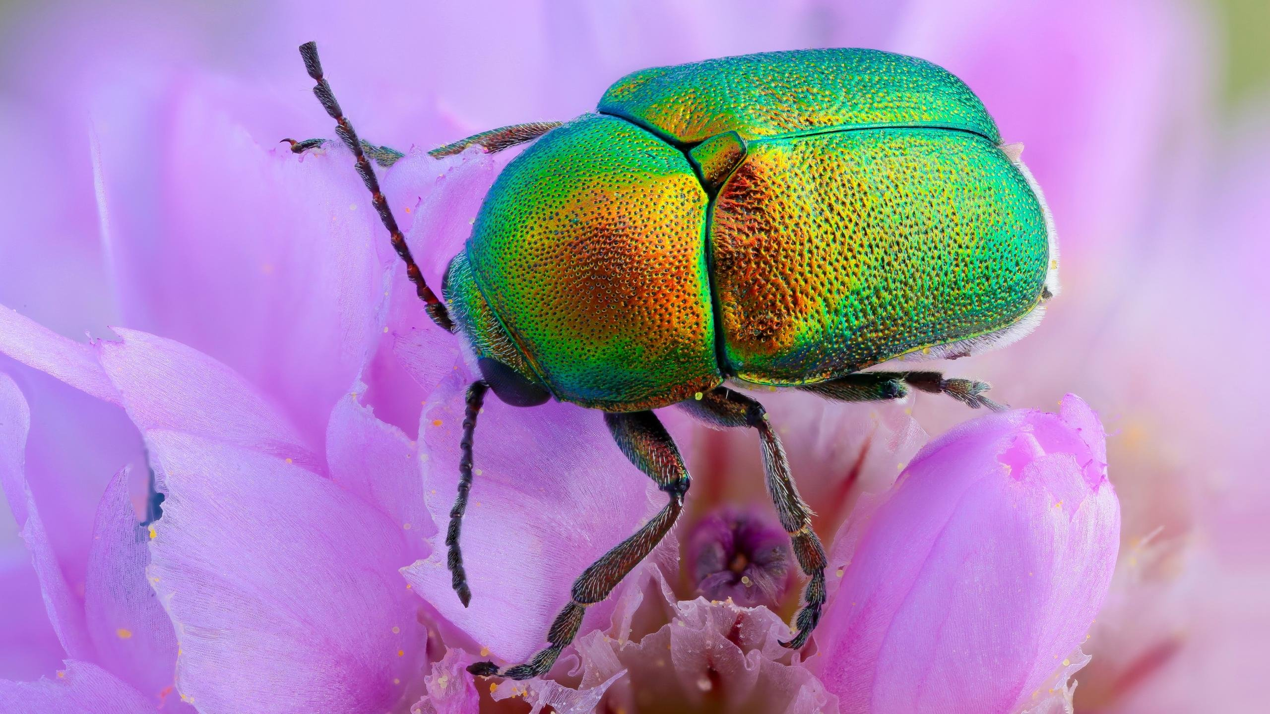 Awesome Beetle free wallpaper ID:421519 for hd 2560x1440 PC