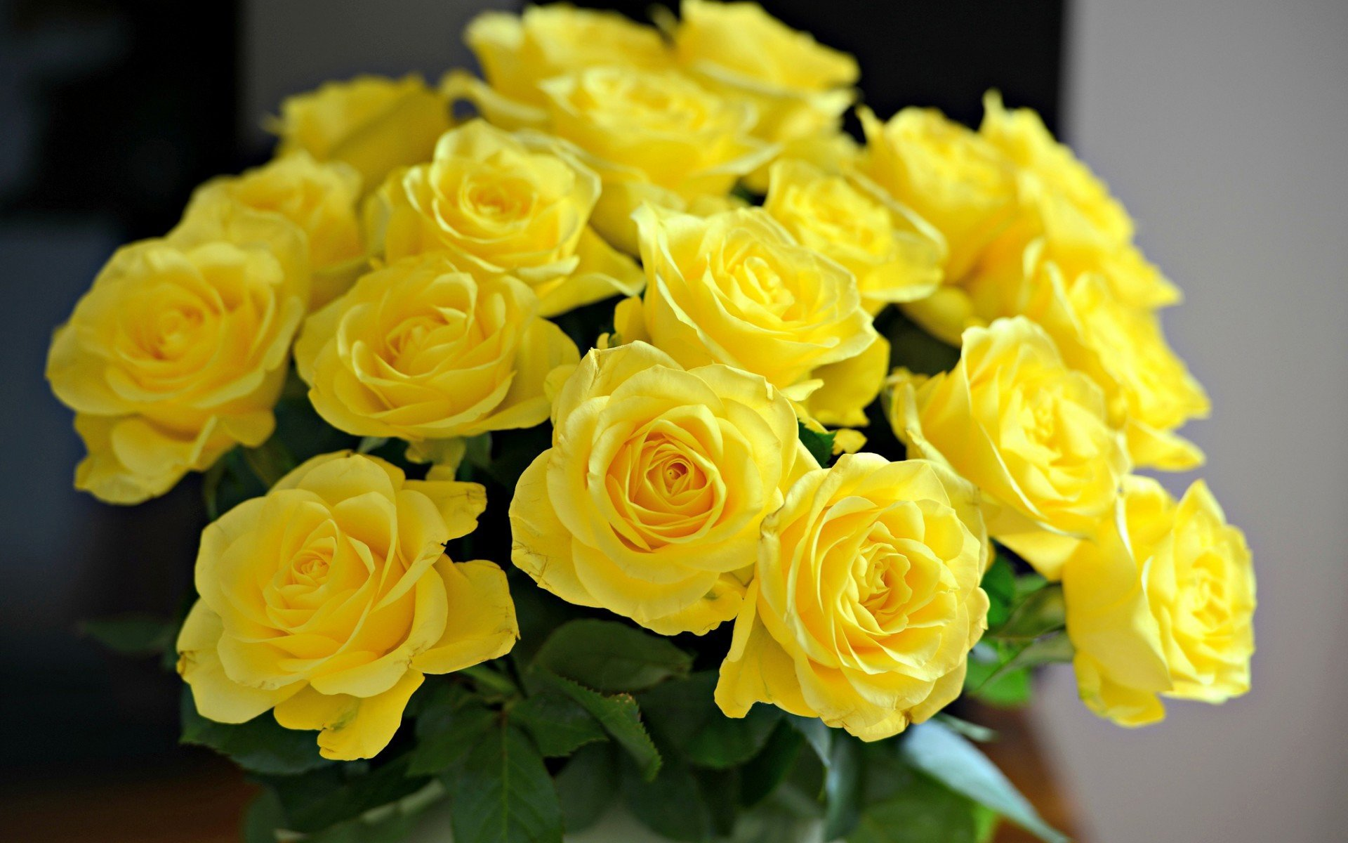 Yellow Rose Wallpapers Hd For Desktop Backgrounds