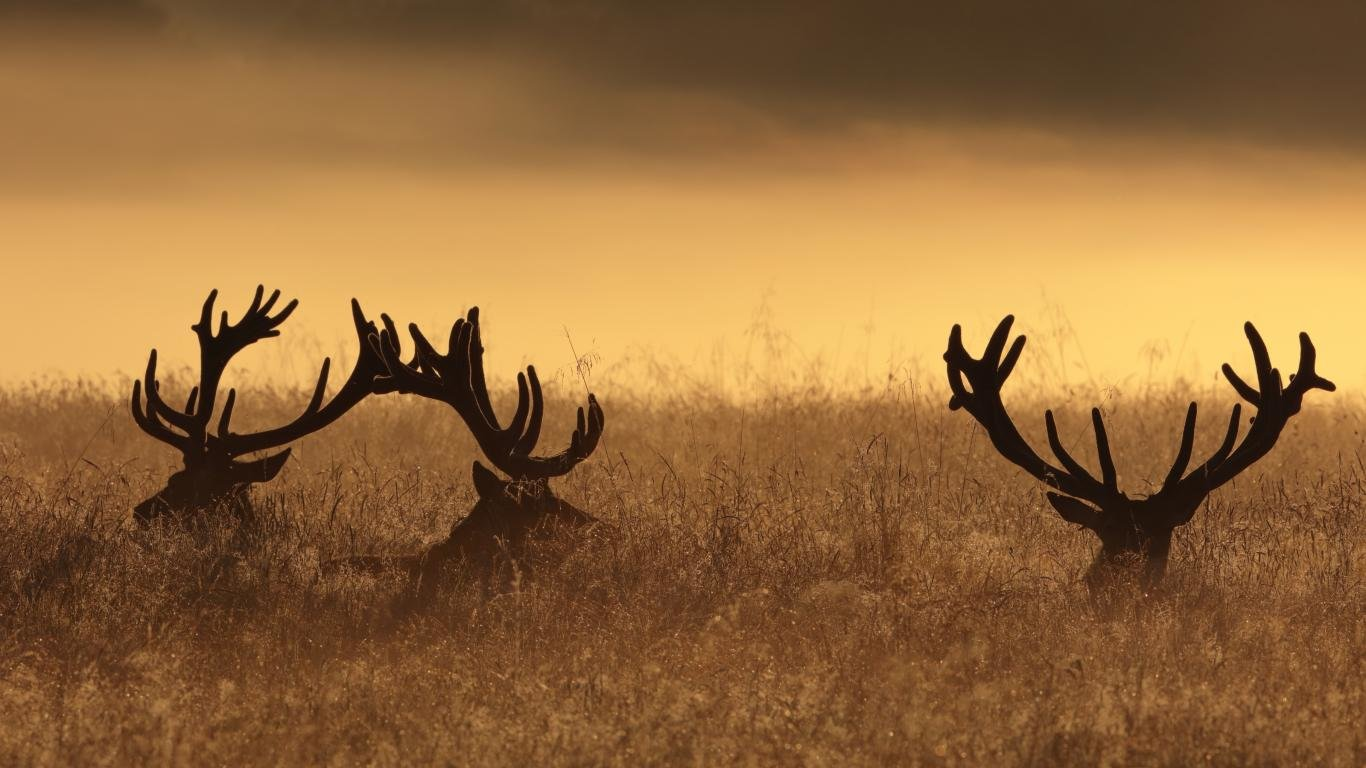 Awesome Deer free background ID:238623 for 1366x768 laptop desktop