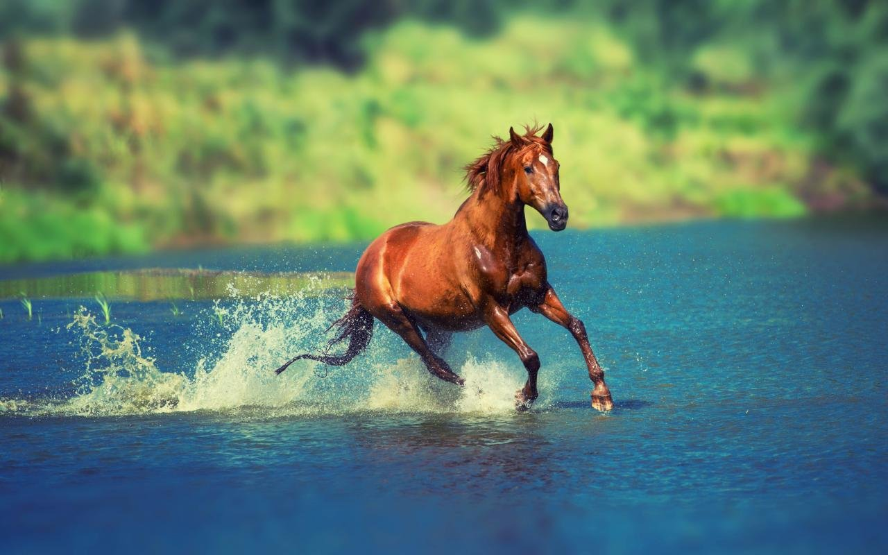 Free download Horse background ID:24106 hd 1280x800 for computer