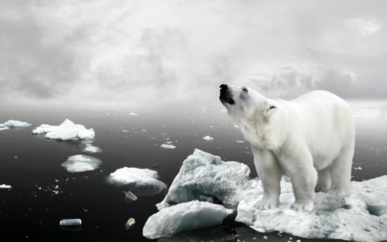 Download hd 1280x800 Polar Bear PC background ID:360022 for free