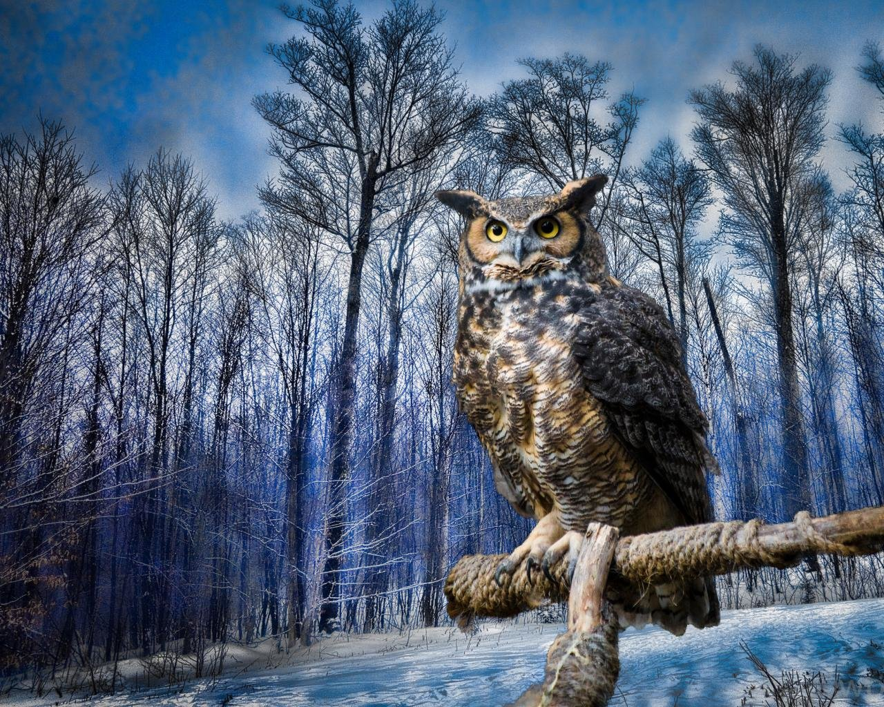 Download hd 1280x1024 Owl computer wallpaper ID:237017 for free