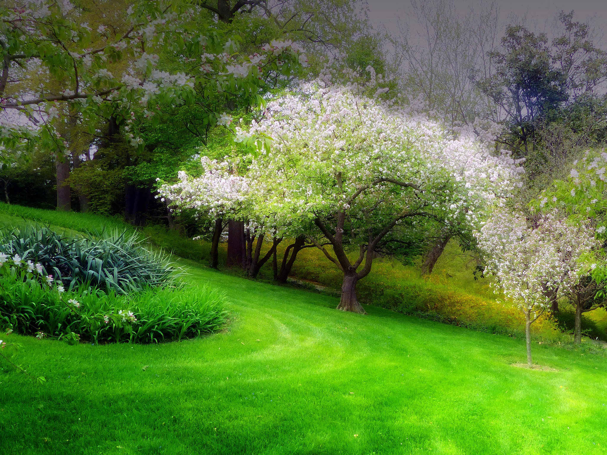 Free download Spring background ID:104095 hd 2048x1536 for computer