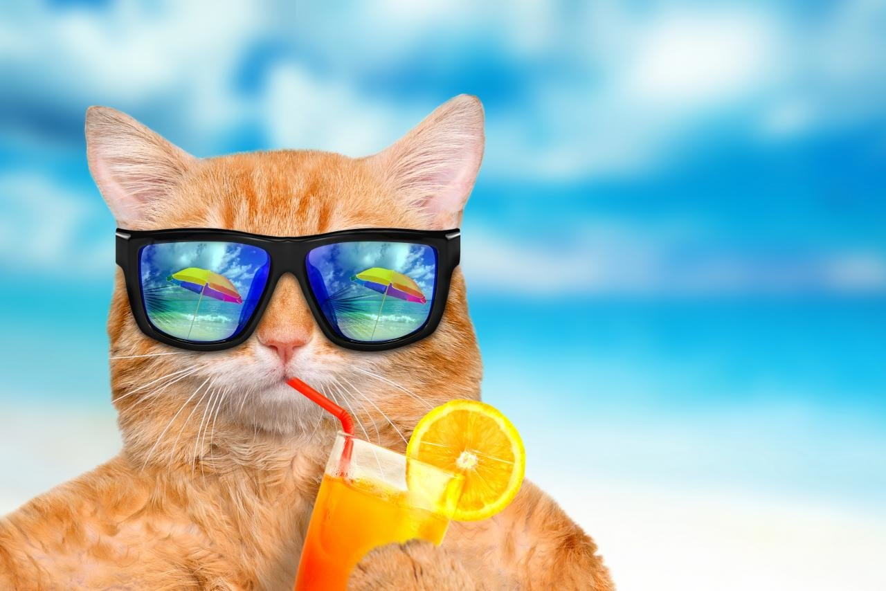 Awesome Funny cat free background ID:373410 for hd 1280x854 PC