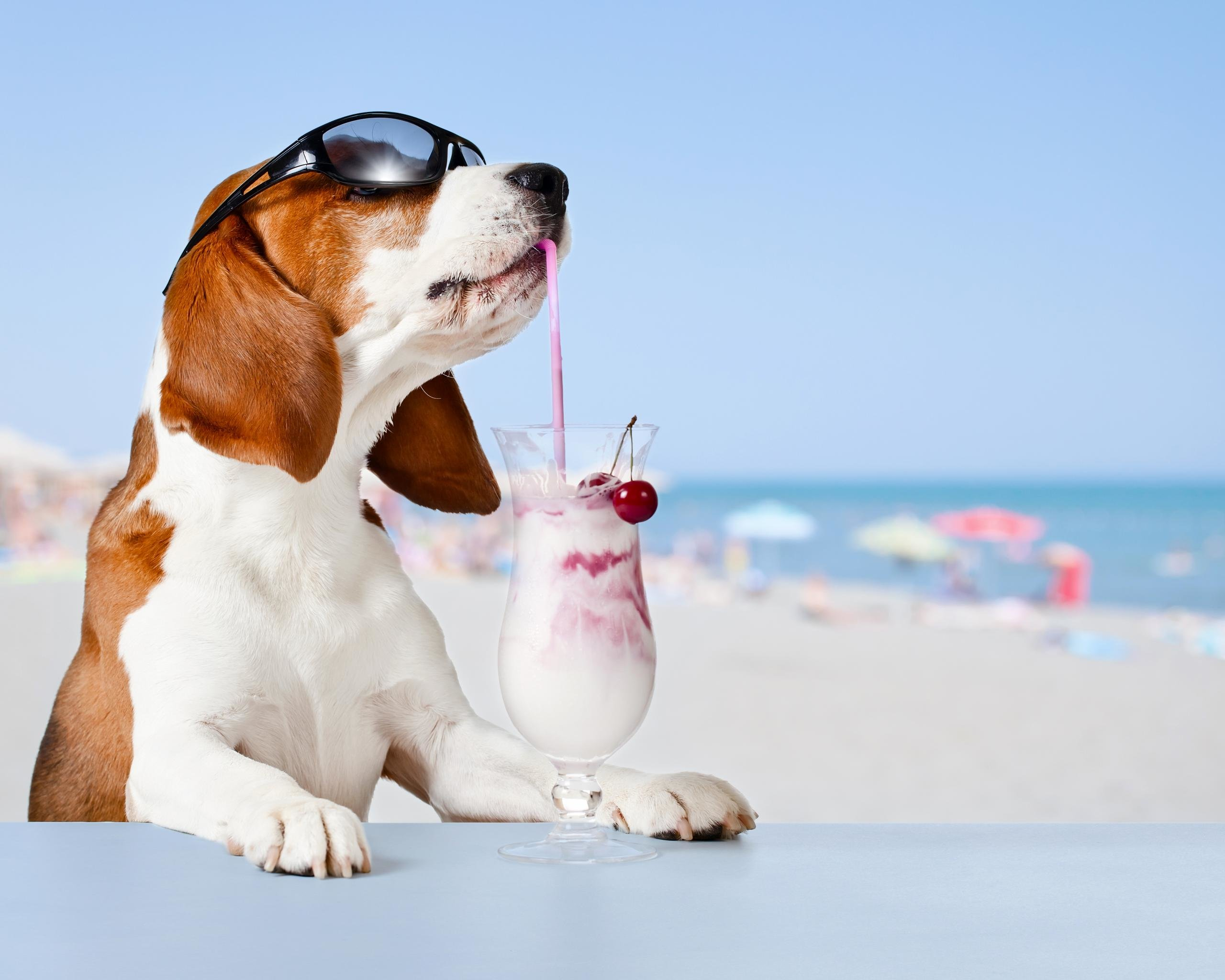 Awesome Basset Hound free wallpaper ID:214126 for hd 2560x2048 computer