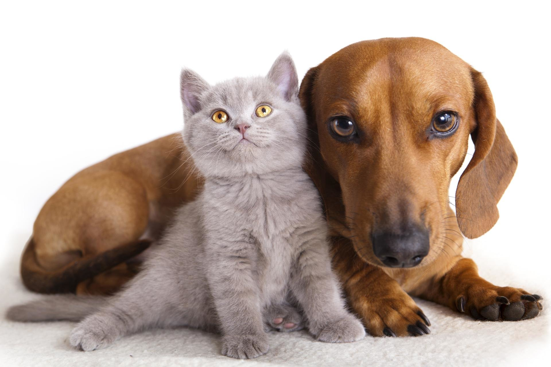 Free Cat and Dog high quality wallpaper ID:125335 for hd 1920x1280 PC