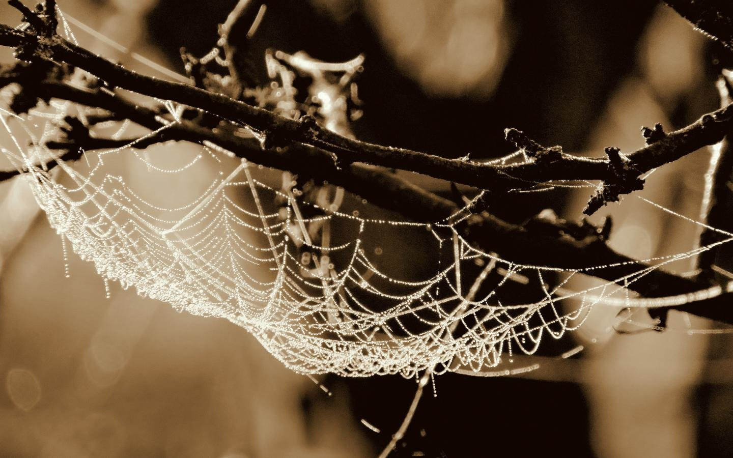 Awesome Spider Web free wallpaper ID:184796 for hd 1440x900 PC