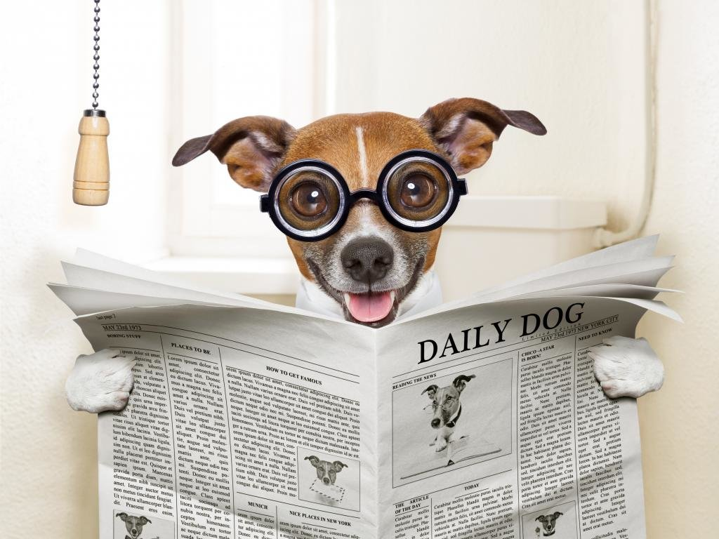 Best Funny dog background ID:219328 for High Resolution hd 1024x768 computer