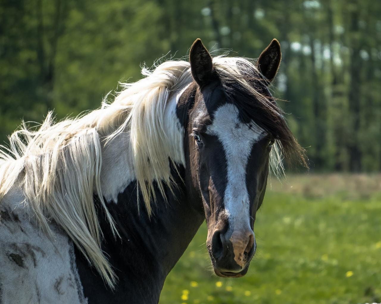 High resolution Horse hd 1280x1024 wallpaper ID:24089 for PC
