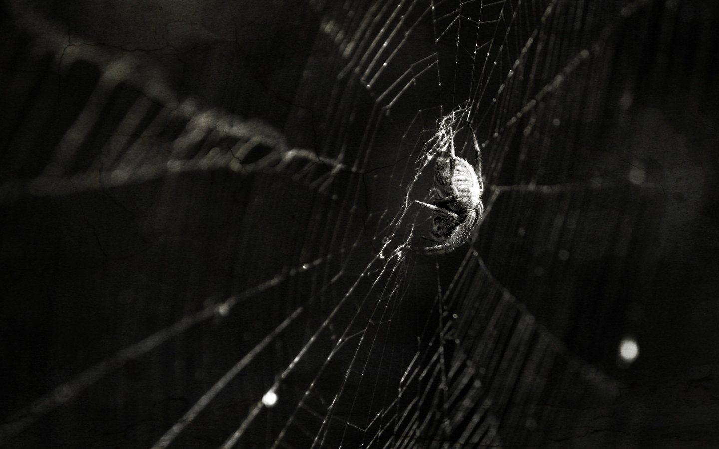 Awesome Spider free wallpaper ID:22062 for hd 1440x900 desktop