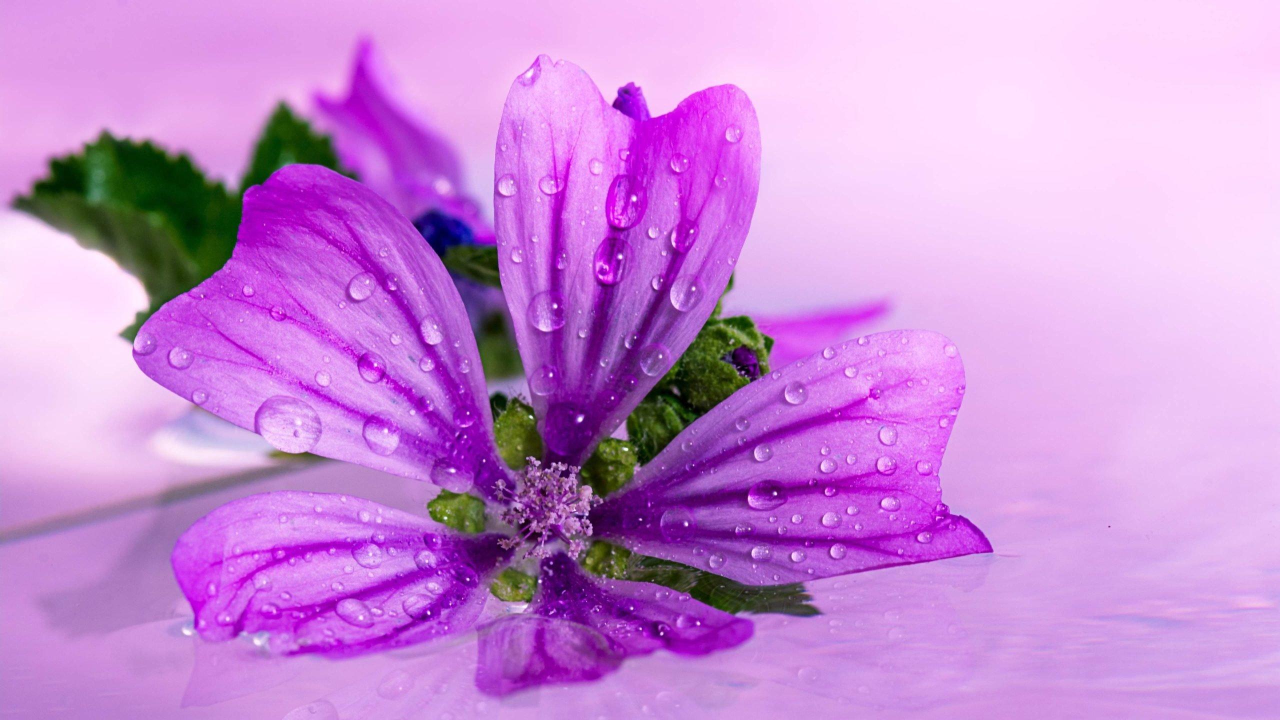 Download Hd 2560x1440 Purple Flower Computer Wallpaper Id 287228 For