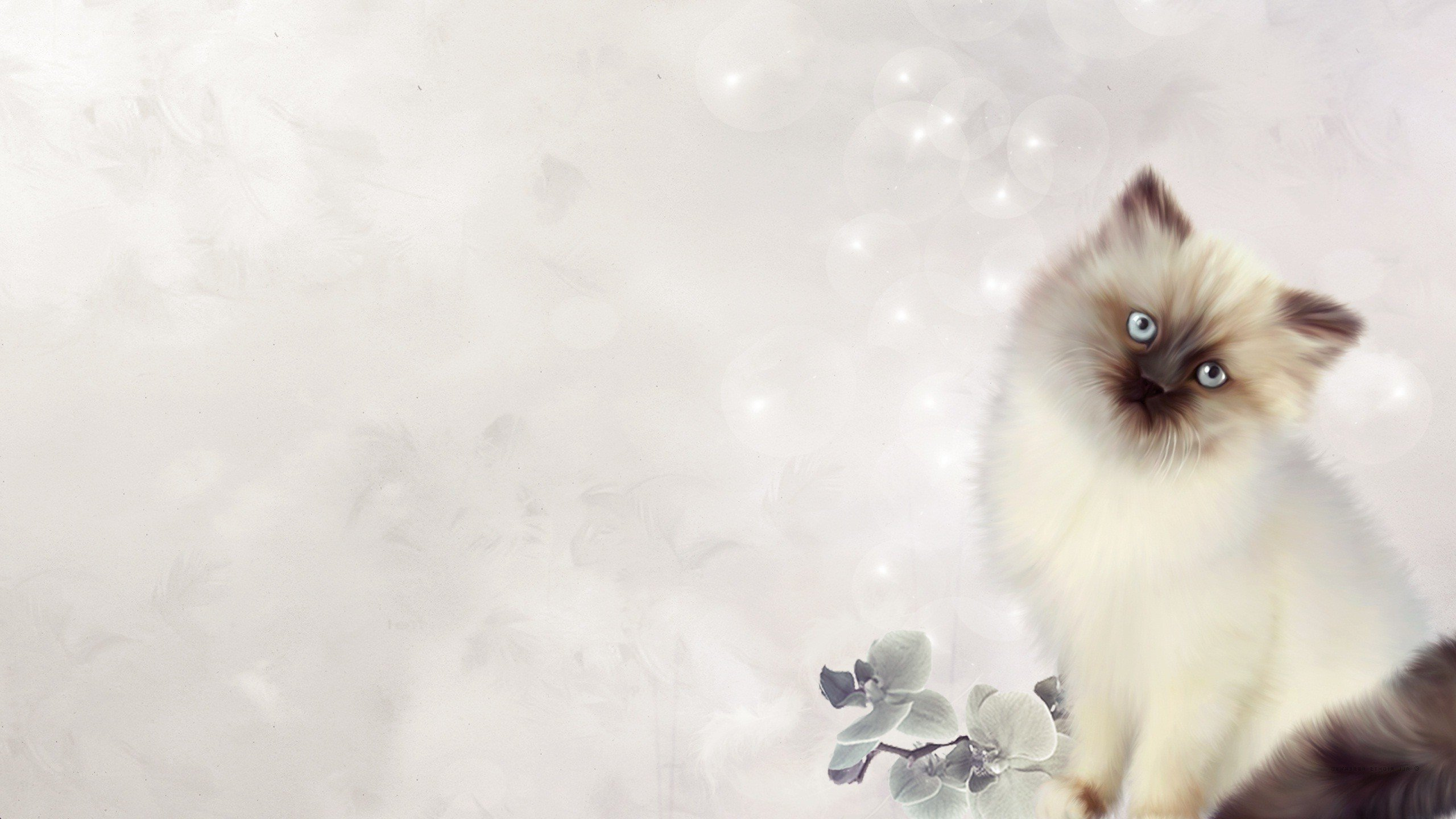 Download hd 2560x1440 Kitten desktop wallpaper ID:426600 for free
