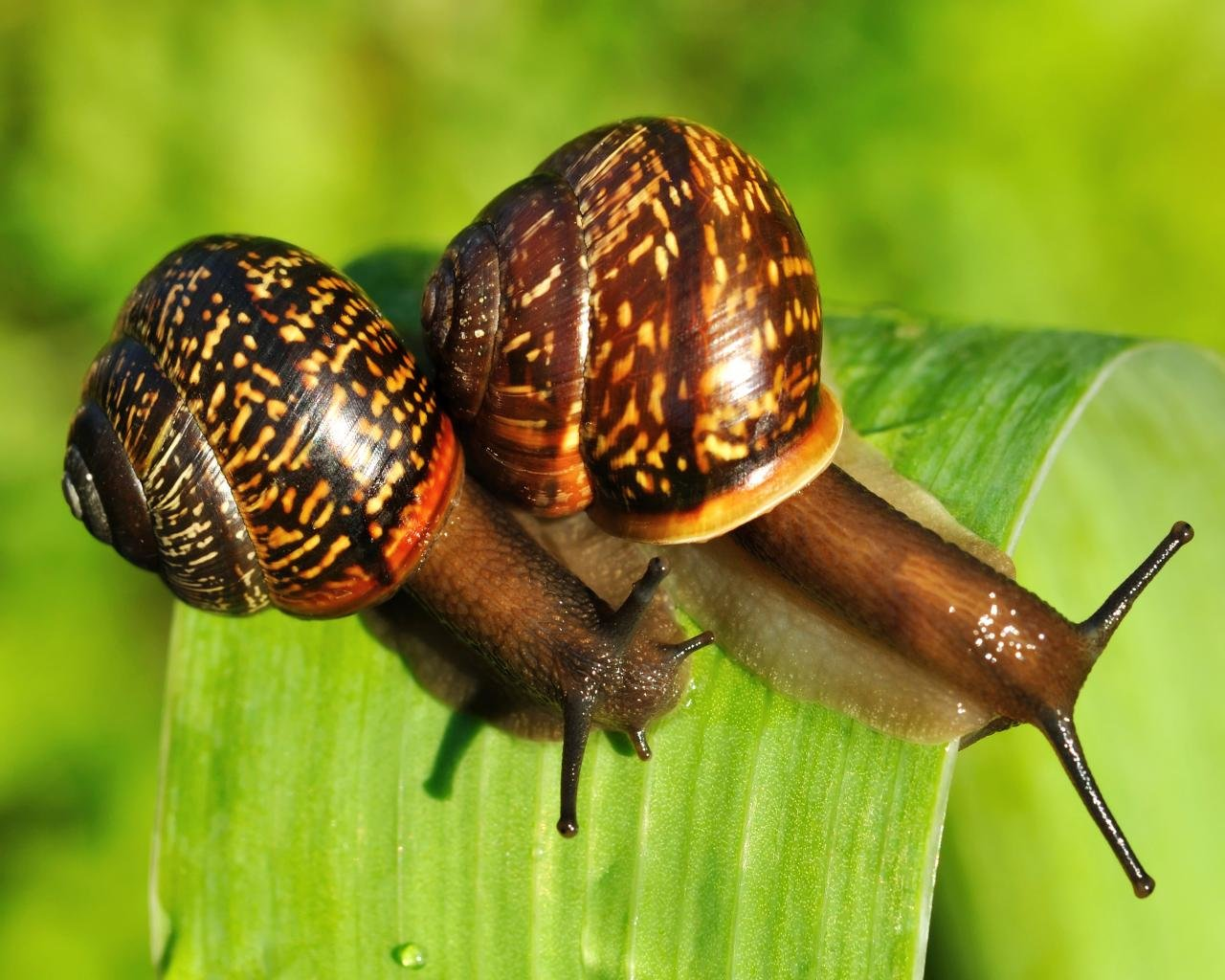 Free download Snail wallpaper ID:198913 hd 1280x1024 for desktop