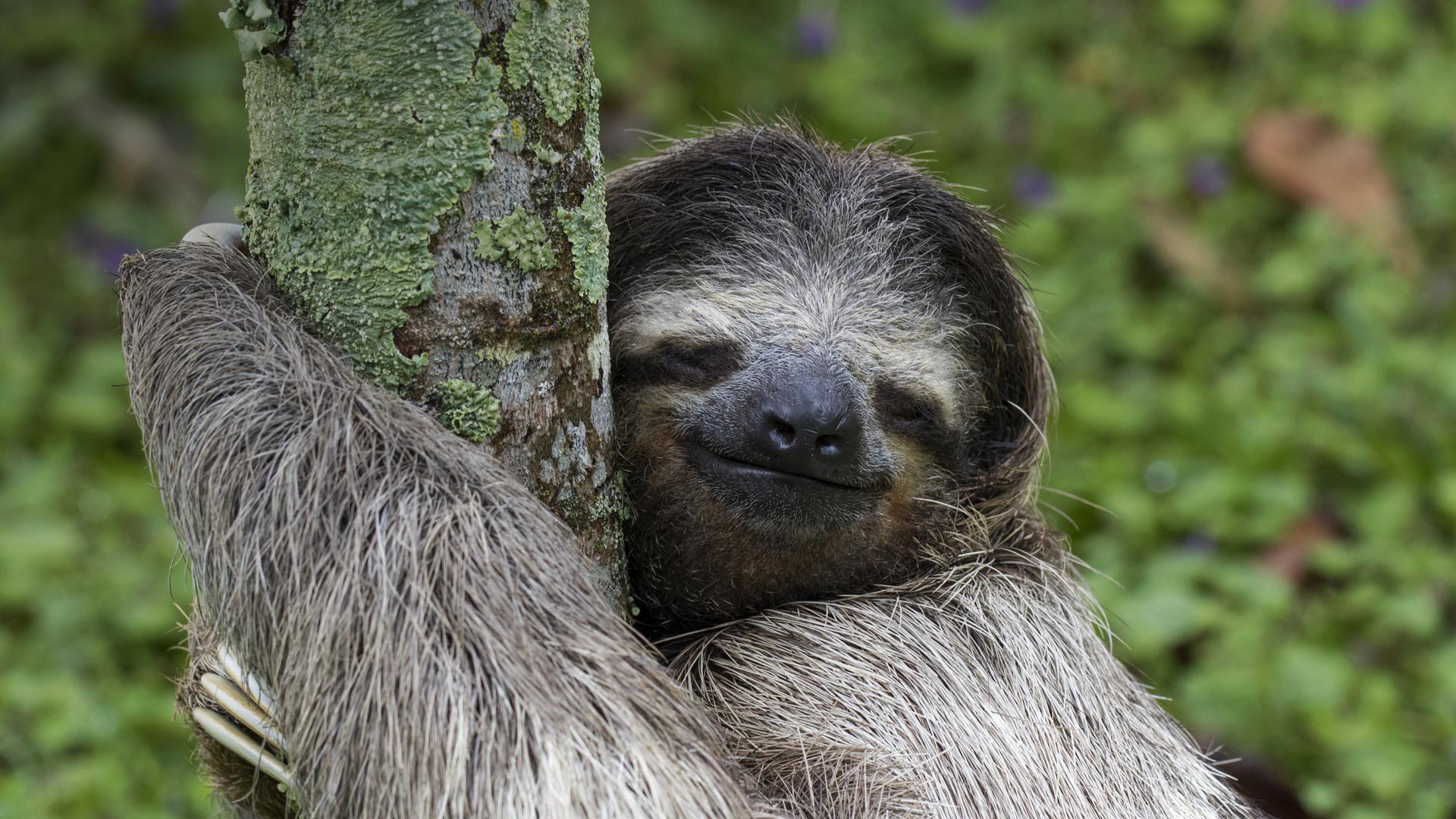 Best Sloth wallpaper ID:68365 for High Resolution full hd PC