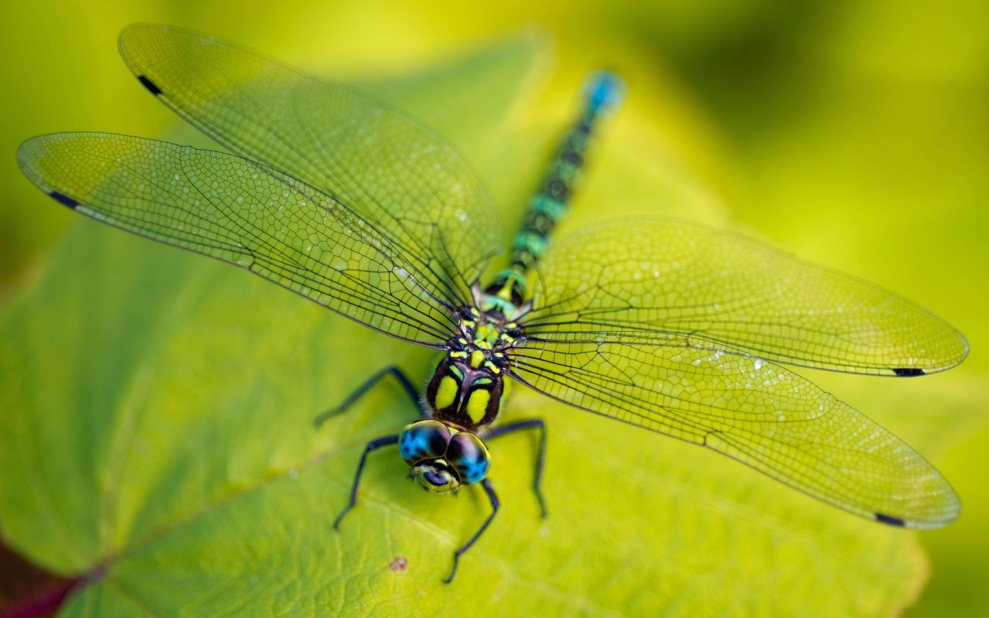 Best Dragonfly wallpaper ID:467617 for High Resolution hd 1440x900 desktop