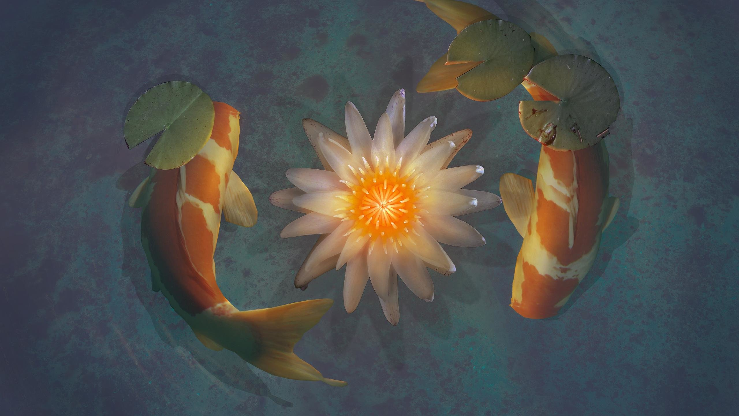 Best Koi background ID:134434 for High Resolution hd 2560x1440 desktop