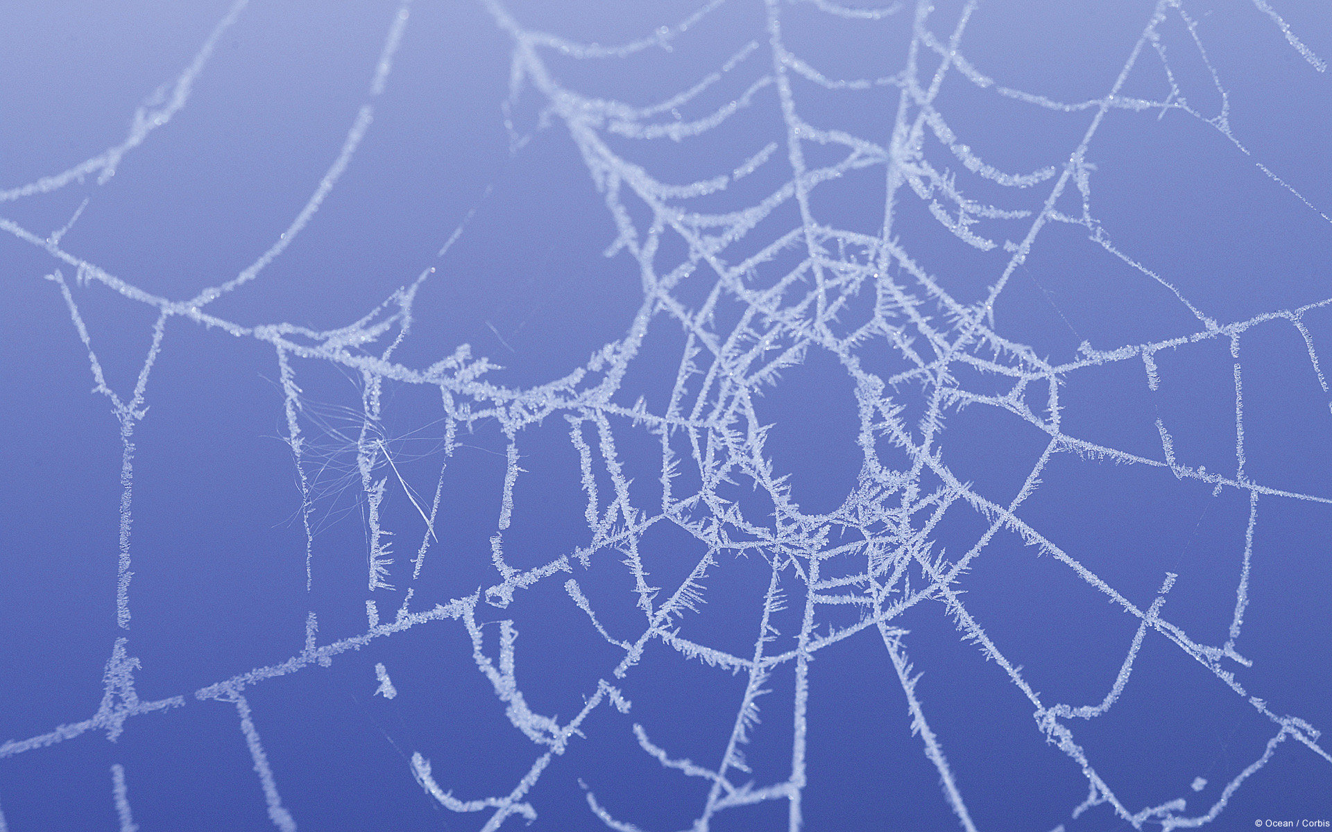 Free download Spider Web wallpaper ID:184785 hd 1920x1200 for desktop