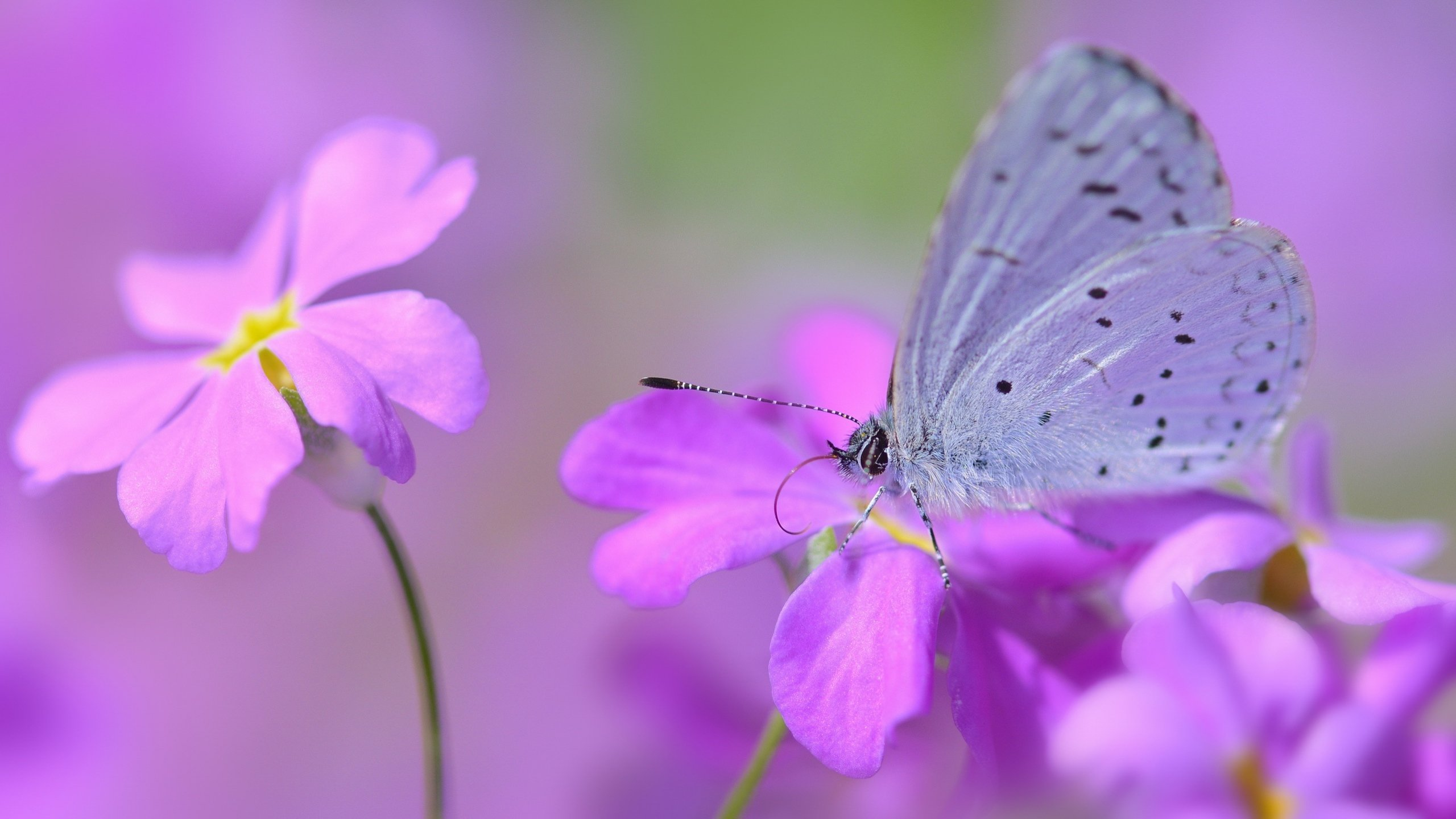 Awesome Butterfly free background ID:168434 for hd 2560x1440 PC