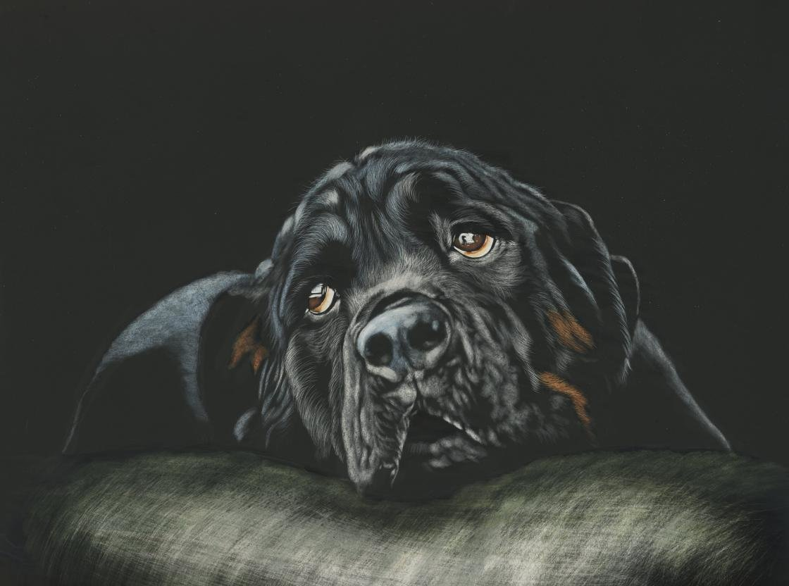 Free download Rottweiler background ID:68594 hd 1120x832 for desktop