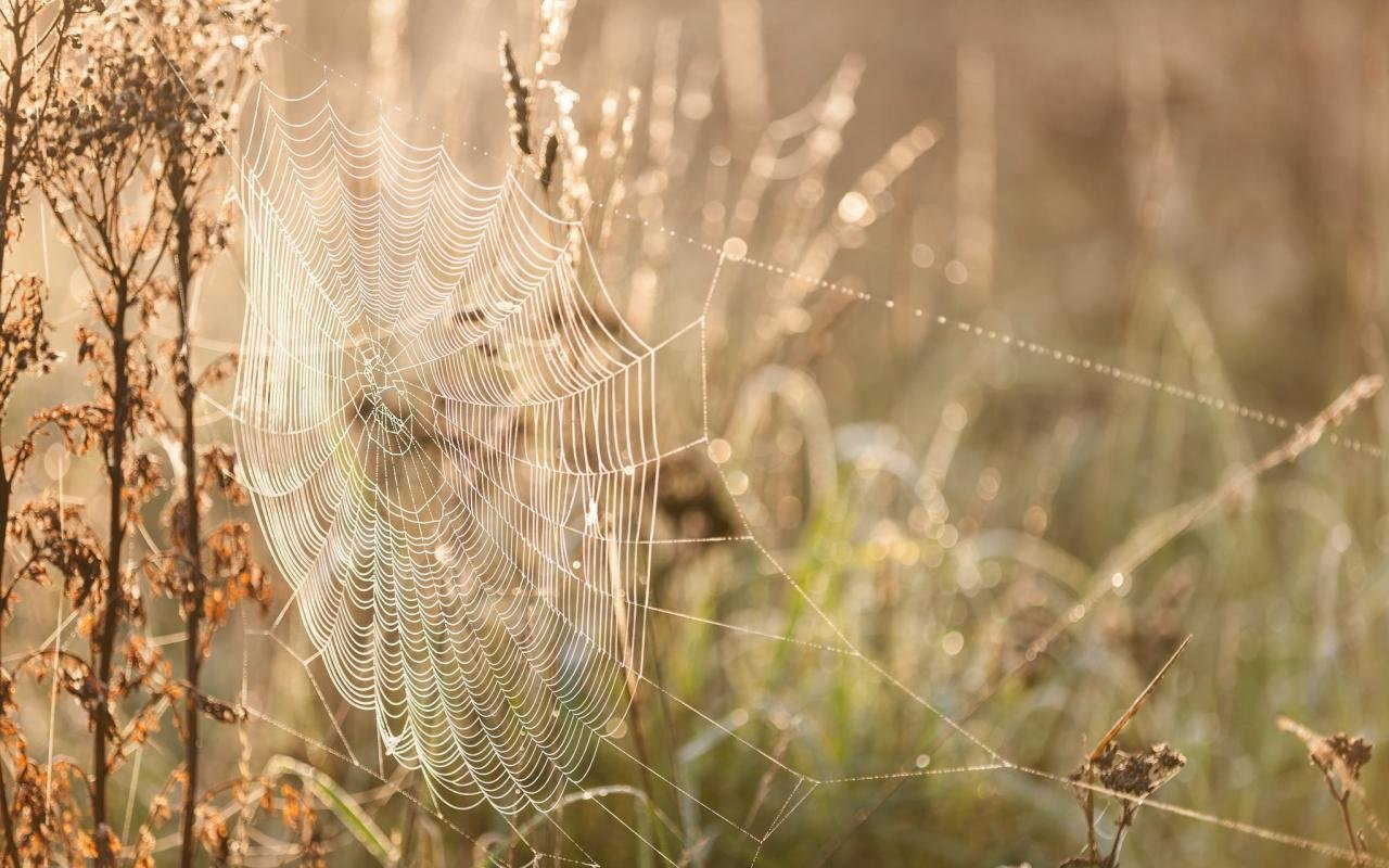 Download hd 1280x800 Spider Web PC background ID:184752 for free