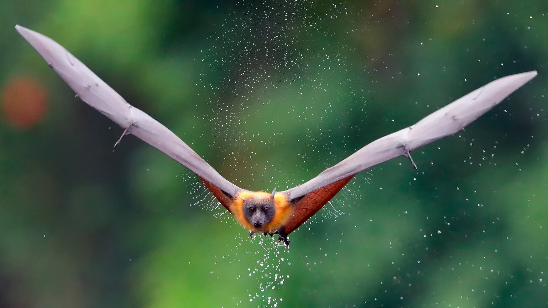 Best Bat wallpaper ID:353105 for High Resolution hd 1920x1080 desktop