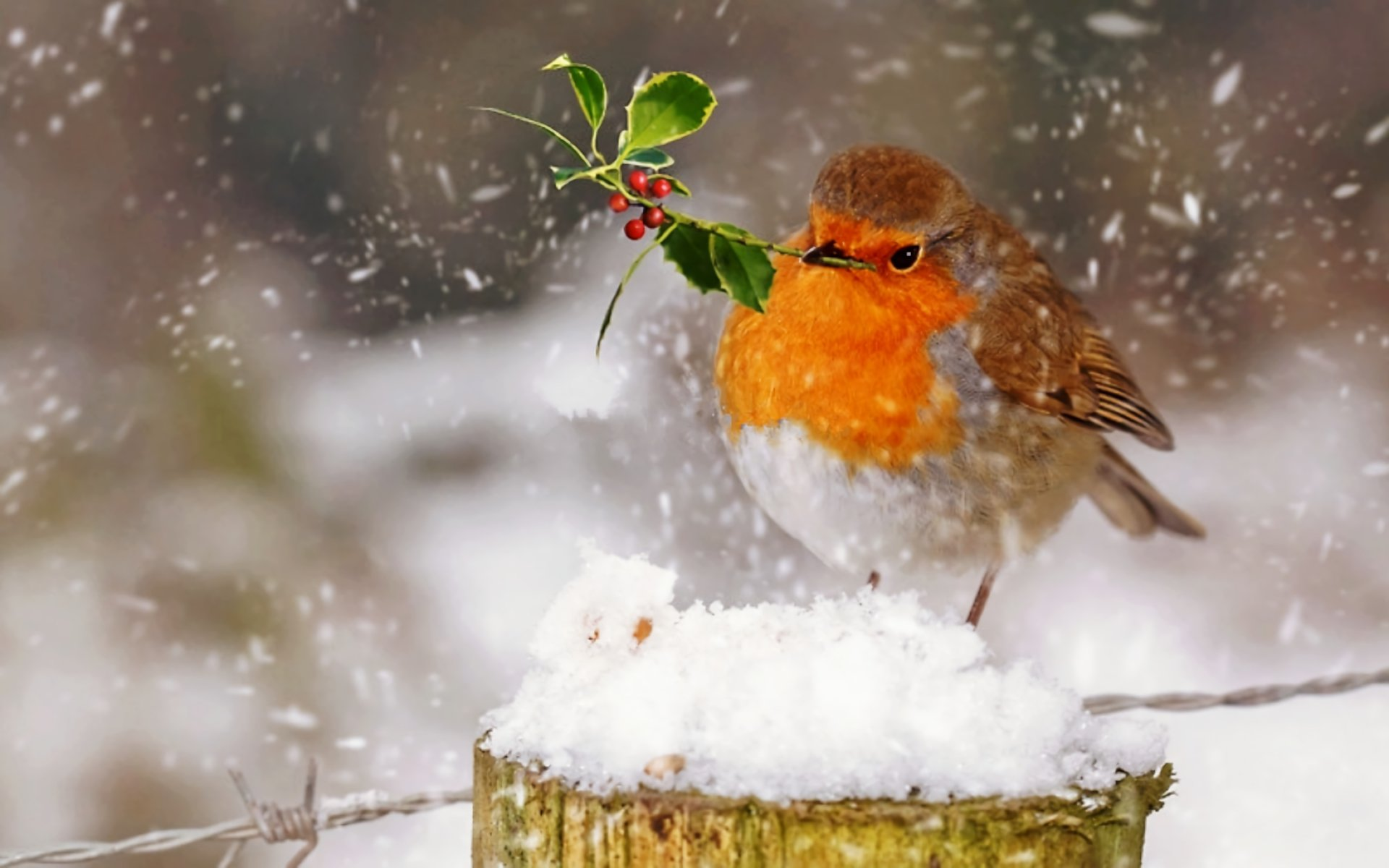 Best Robin bird background ID:360162 for High Resolution hd 1920x1200 PC