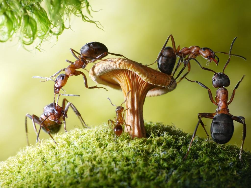 Best Ant background ID:401314 for High Resolution hd 1024x768 desktop