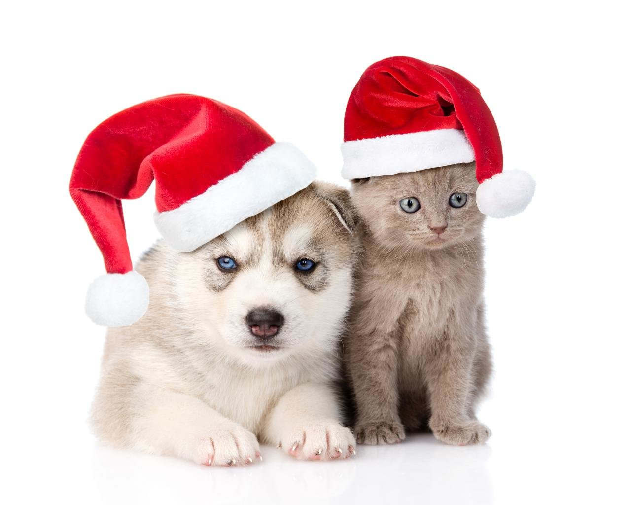 Free download Cat and Dog wallpaper ID:125360 hd 1280x1024 for desktop