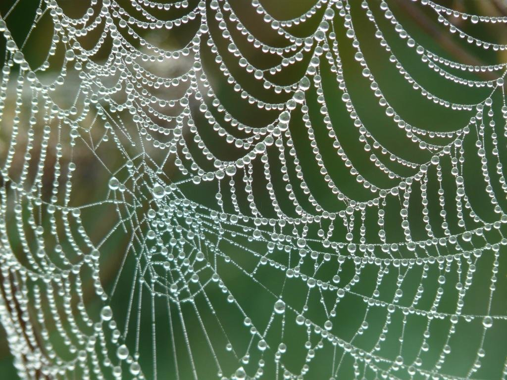 Best Spider Web wallpaper ID:184784 for High Resolution hd 1024x768 PC