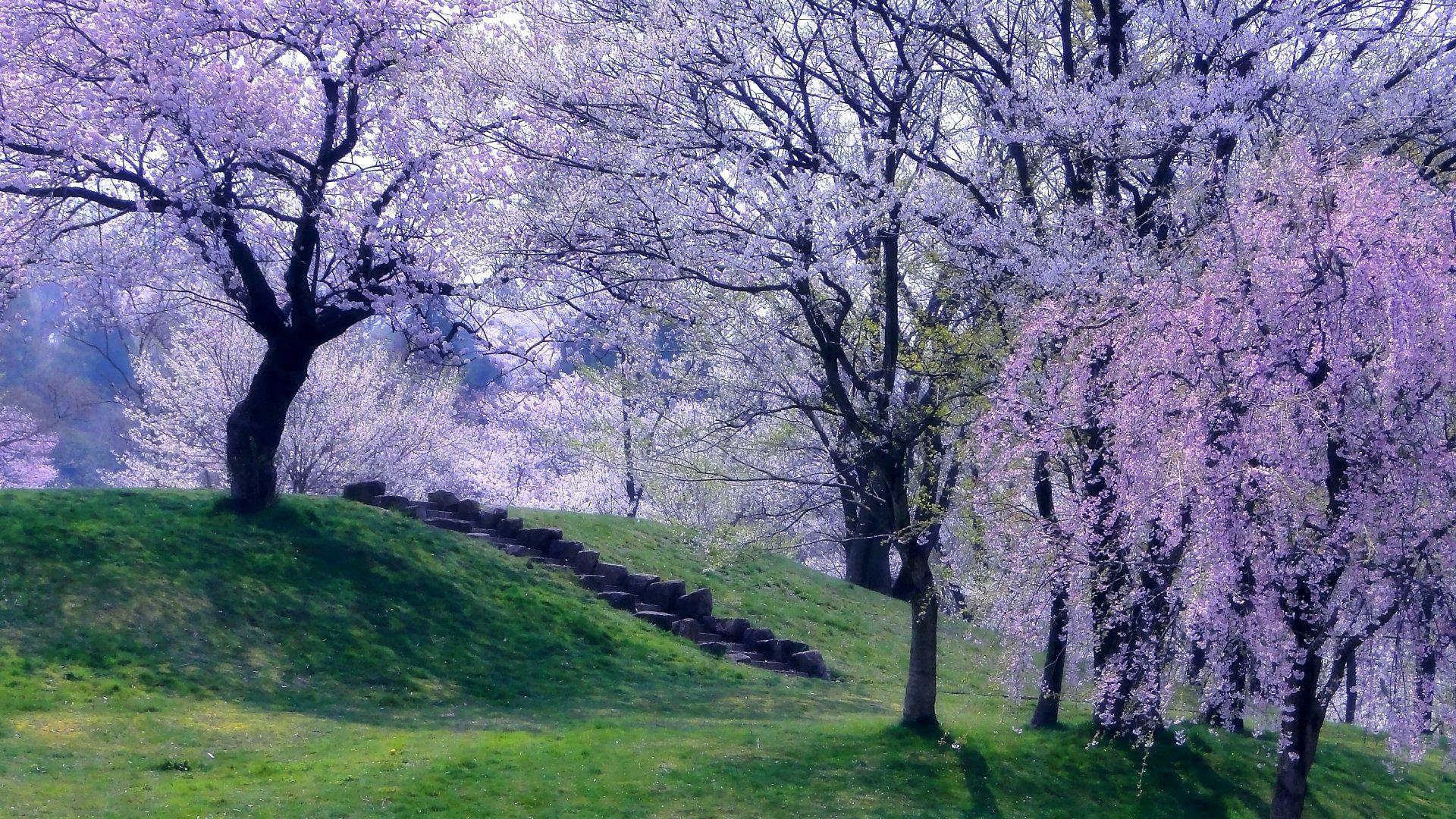 Spring wallpapers 1920x1080 Full HD (1080p) desktop ...
