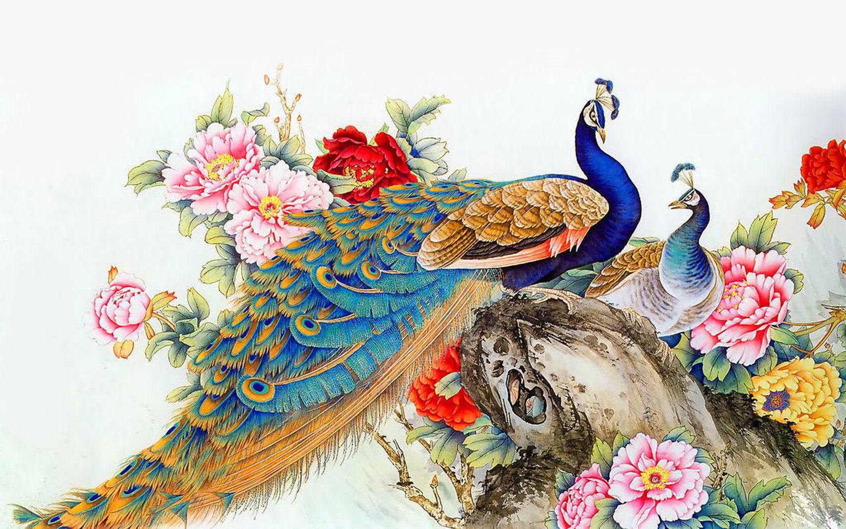 Free Peacock high quality background ID:151758 for hd 1680x1050 desktop