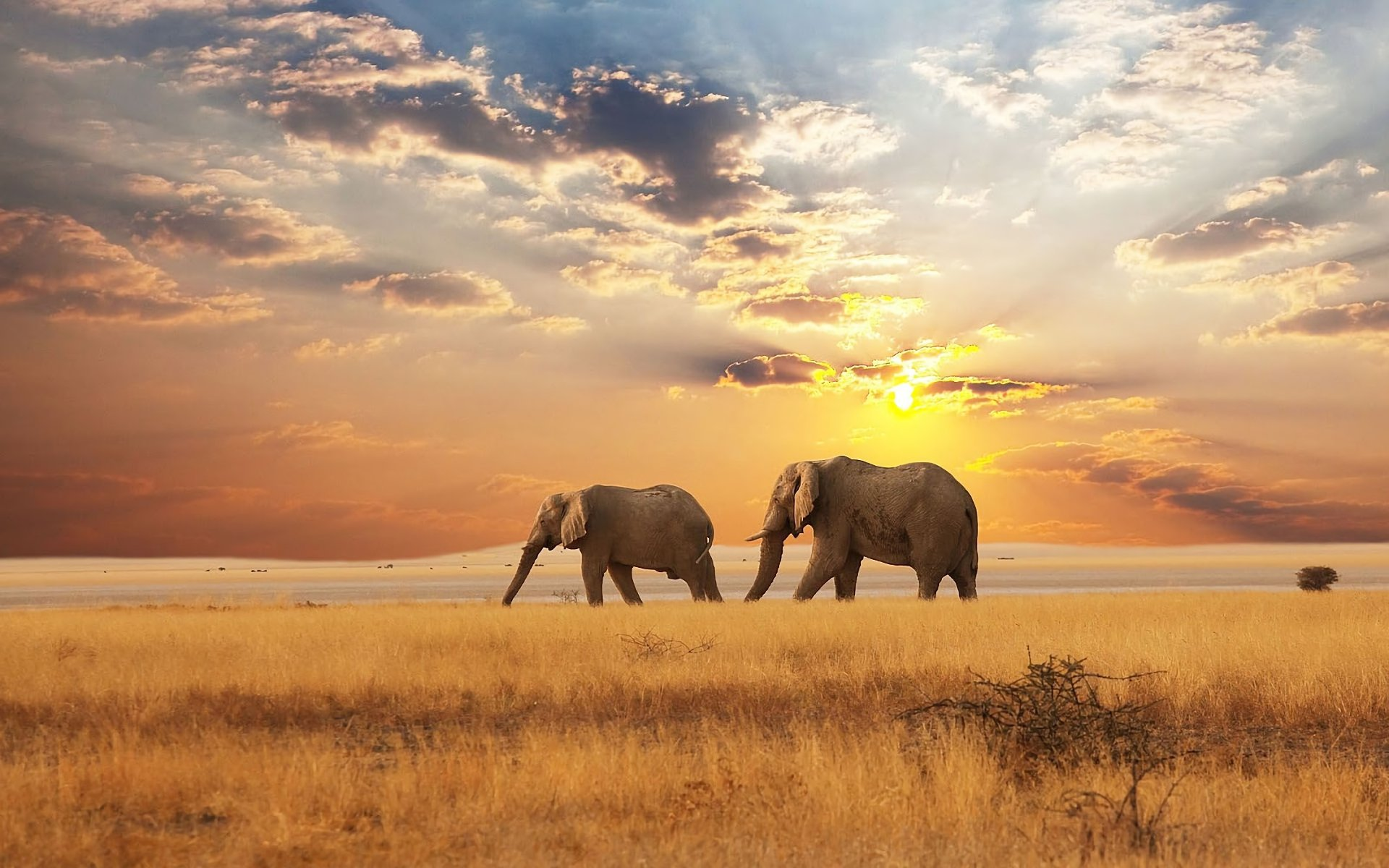 High resolution Elephant hd 1920x1200 background ID:132797 for PC