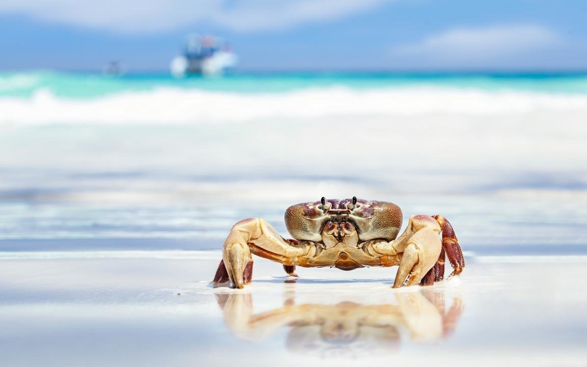 Best Crab background ID:294317 for High Resolution hd 1152x720 desktop