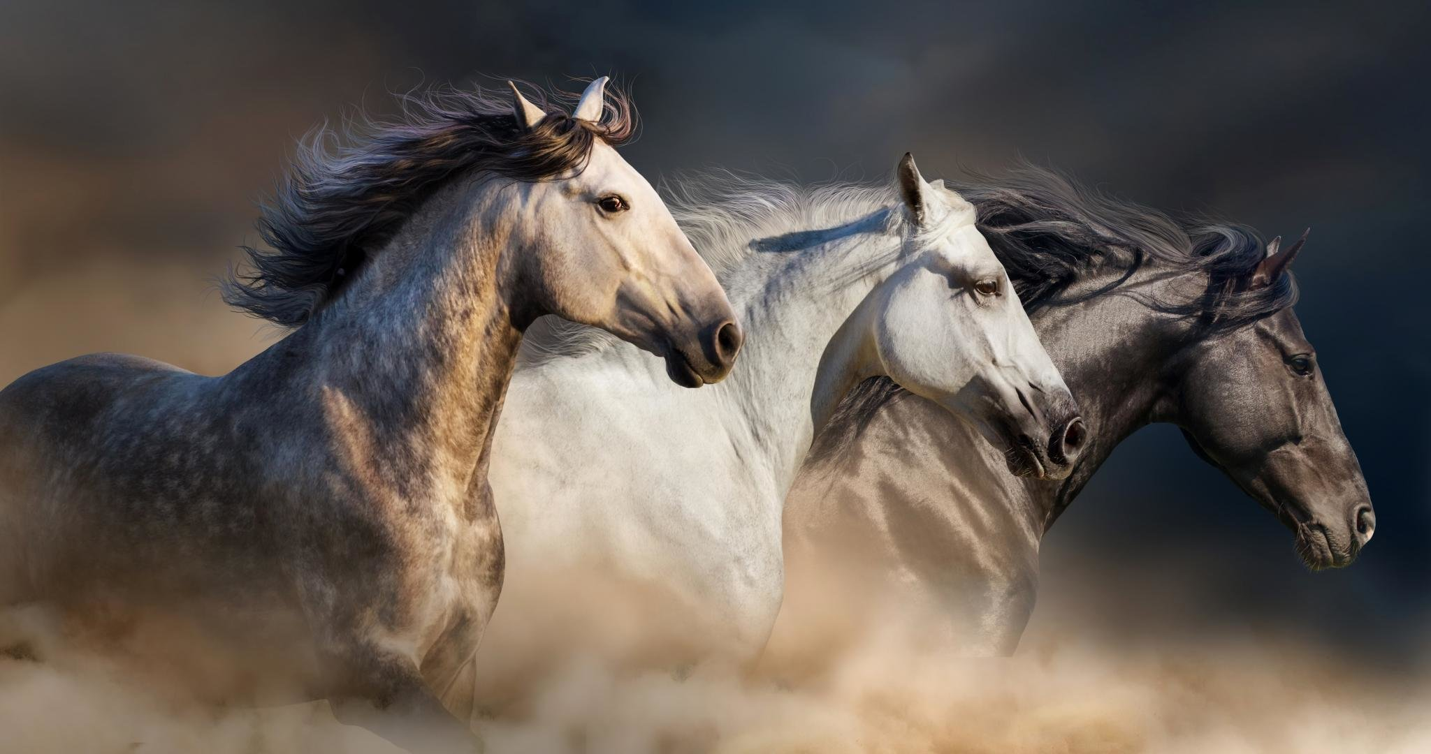 High Resolution Horse Hd 2048x1080 Wallpaper Id 23654 For Computer