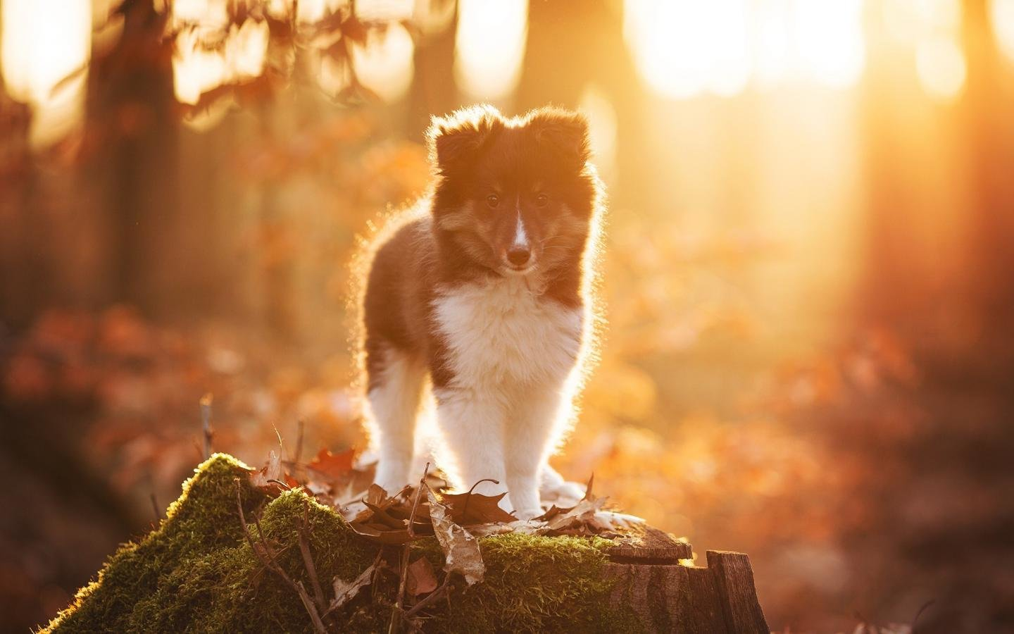High resolution Puppy hd 1440x900 background ID:46725 for desktop