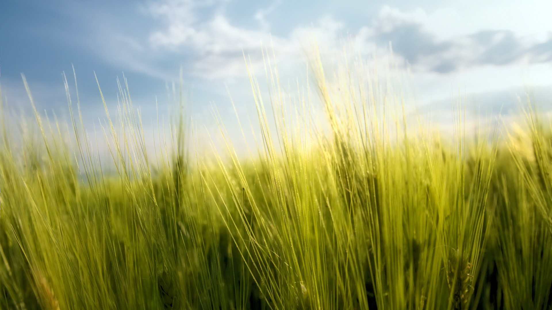 High Resolution Grass Full Hd 1080p Wallpaper Id 378159 For Computer