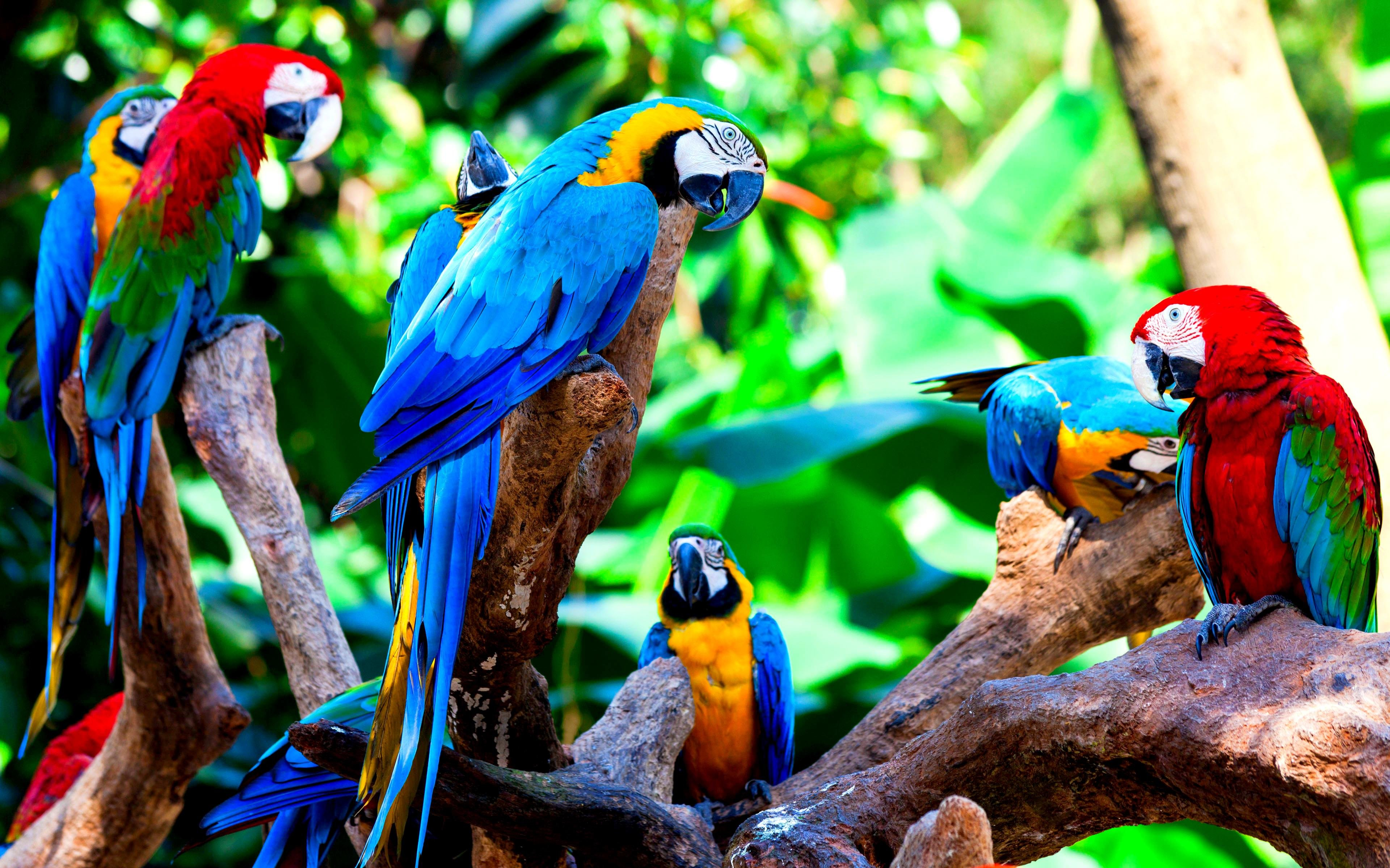 Free download Macaw background ID:46309 hd 3840x2400 for computer